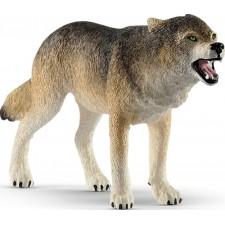 Wolf Zähne fletschend