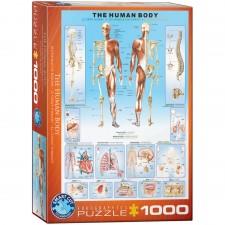EuroGraphics Puzzle Der menschliche Körper 1000 Teile